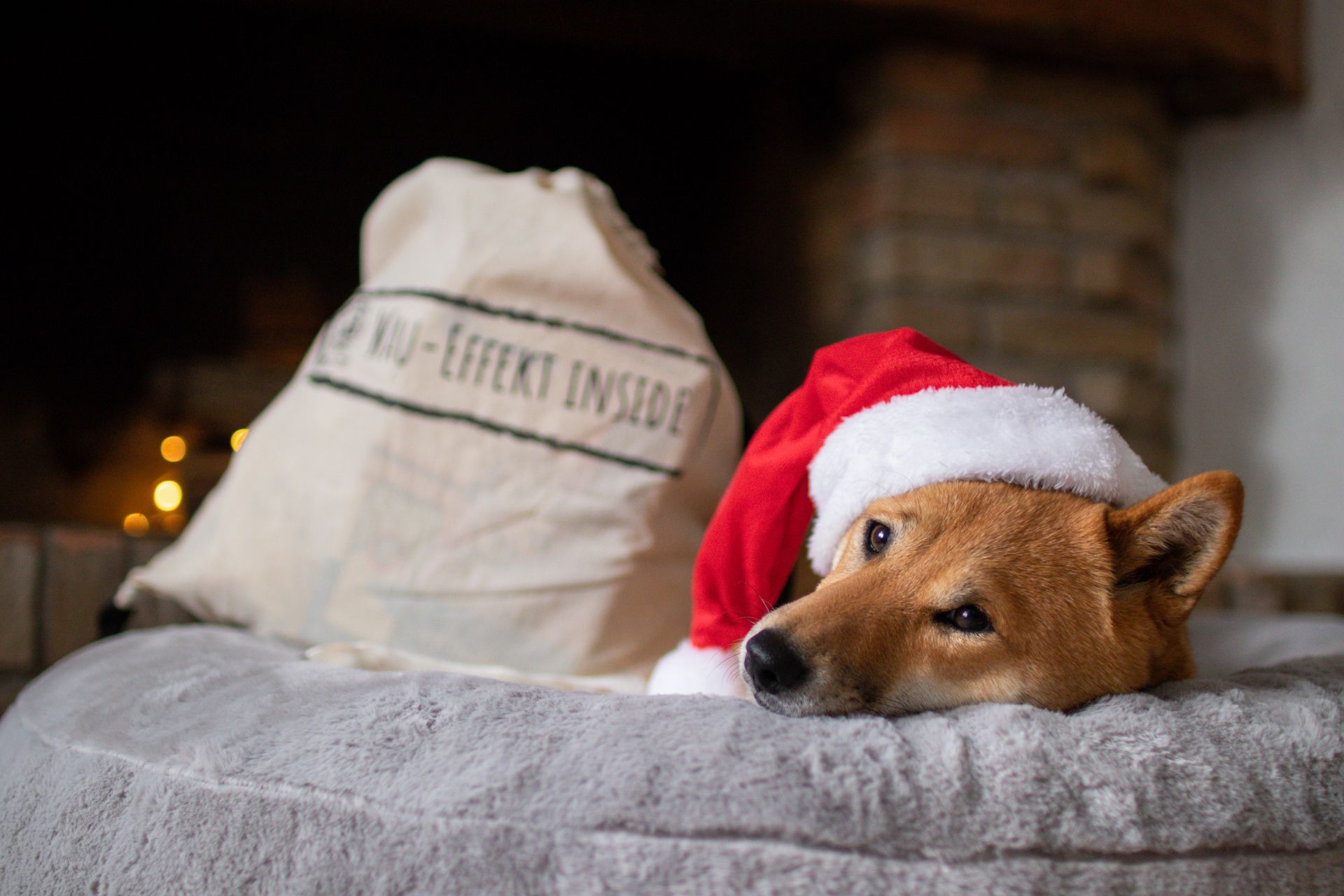 Adventskalender Wau-Donut Hundebett