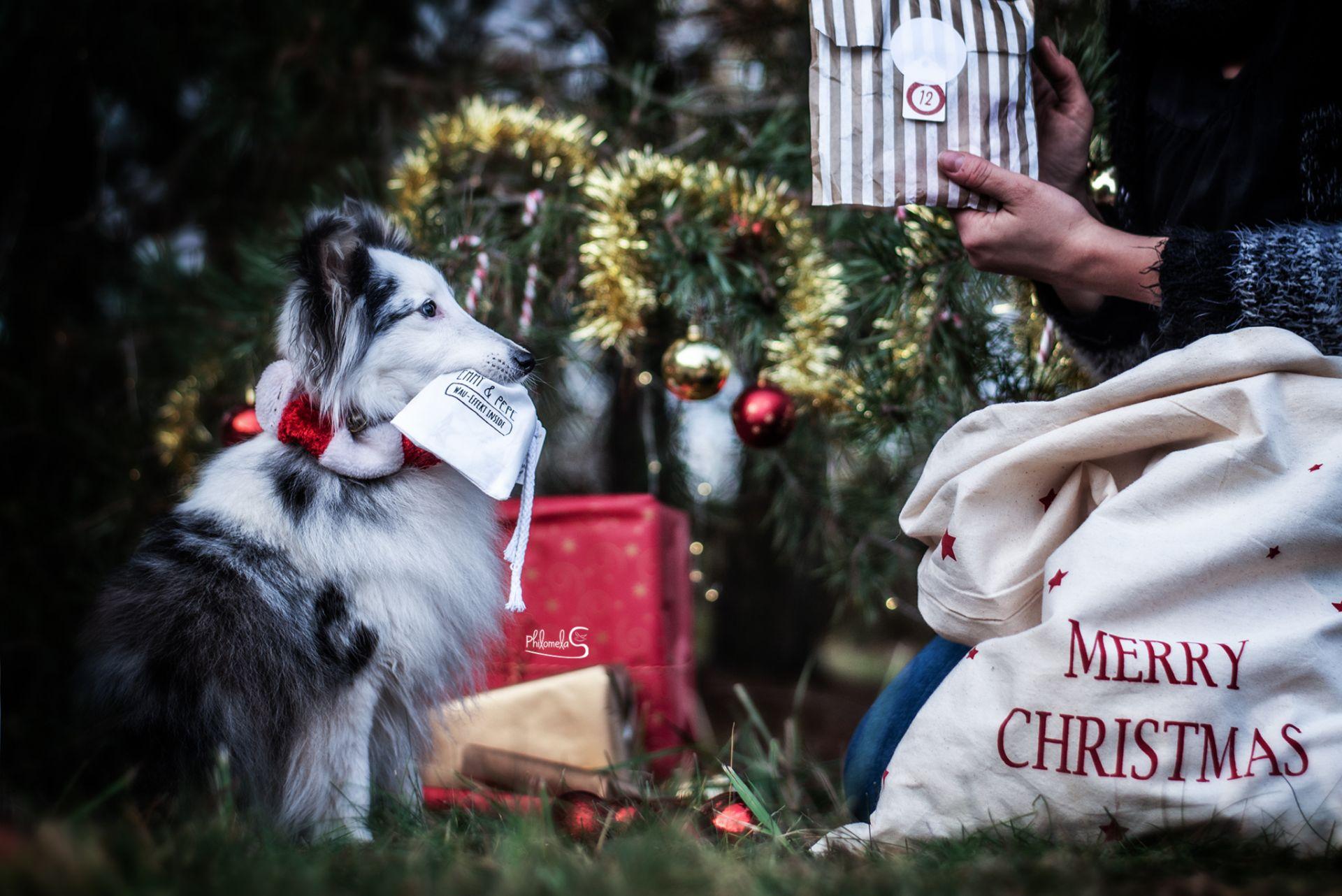 """Adventskalender """"Reisen mit Hund"""""""