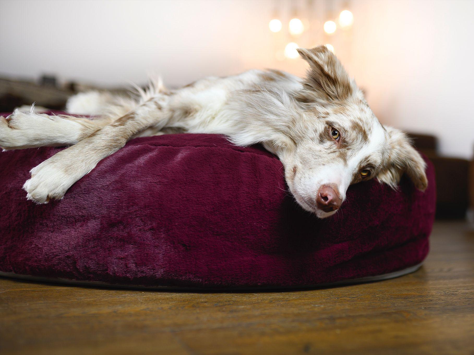 Wau-Sleep Queen